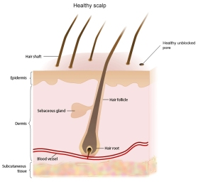 healthy scalp Denika Penn Carothers